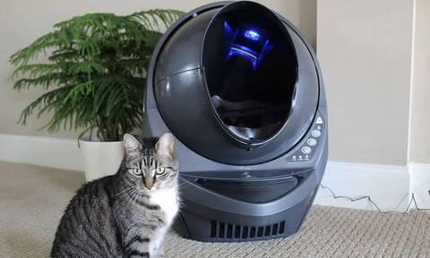 Γάτες: Μια τρομερή ανακάλυψη που θα λατρέψει κάθε ιδιοκτήτης!