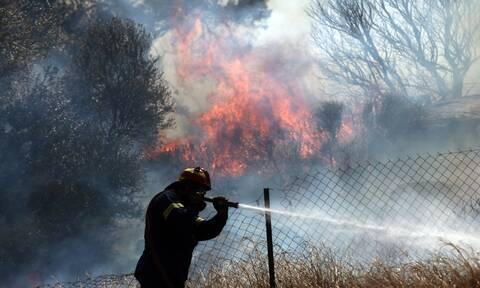 Φωτιά στη Λακωνία: Επί ποδός η Πυροσβεστική