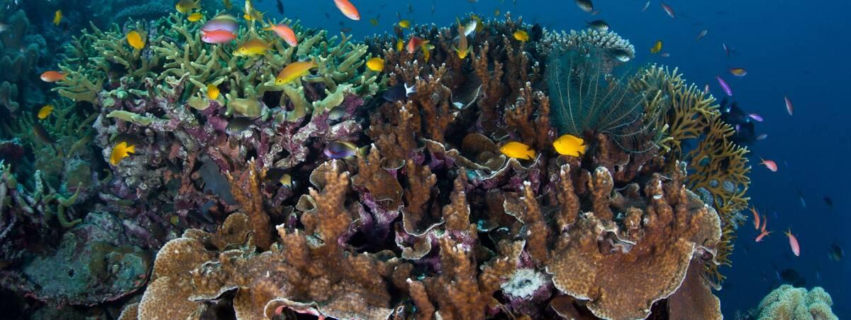Ocean Hub Fish