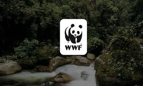 WWF: Απλές, καθημερινές λύσεις μείωσης της κατανάλωσης ενέργειας