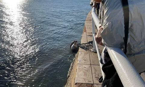 Αλεξανδρούπολη: Αυτοκίνητο παρέσυρε παγκάκι που καθόταν νεαρή γυναίκα η οποία έπεσε στη θάλασσα