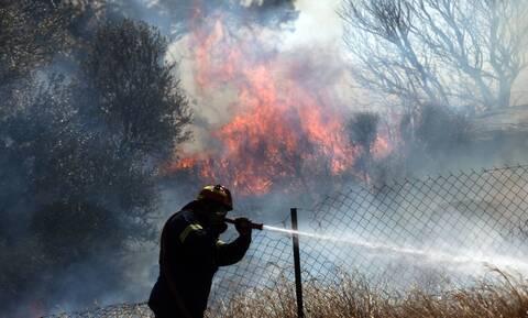 Φωτιά σε δασική έκταση στην Ανατολική Μάνη - Σε ύφεση η πυρκαγιά στην Ασπριά