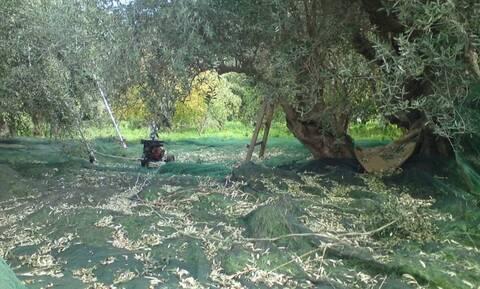 Δολοφονία εργάτη γης στην Καβάλα: «Τον σκότωσα γιατί έτσι μου είπε να κάνω ο Σατανάς»