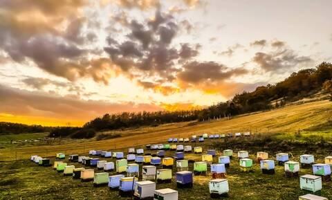 Το καλύτερο μέλι στον κόσμο είναι ελληνικό - Από τα βουνά της Καστοριάς στον Καναδά και τη Μαλαισία