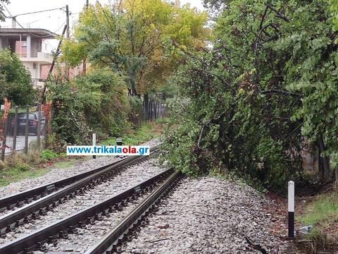 Τρίκαλα: Δένδρο έπεσε πάνω στη σιδηροδρομική γραμμή στον σταθμό του ΟΣΕ (pics)
