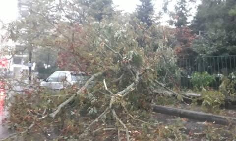 Κακοκαιρία «Αθηνά»: Χτύπησε με αφοδρότητα Αρκαδία, Αργολίδα και Κορινθία – Έσπασαν δέντρα