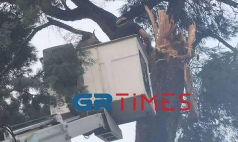 Κακοκαιρία - Θεσσαλονίκη: Πτώσεις δέντρων και προβλήματα στην ηλεκτροδότηση (pics+vid)