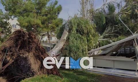Κακοκαιρία: Η «Αθηνά» ρήμαξε τα πάντα και στην Ερέτρια - Τεράστιες καταστροφές σε καταστήματα (pics)