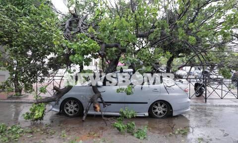 Κακοκαιρία «Μπάλλος»: Πτώσεις δέντρων στον Ταύρο - Πλάκωσαν αυτοκίνητο (photos)