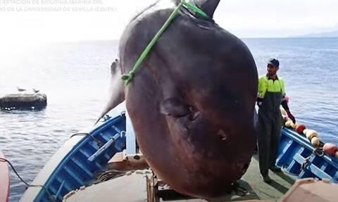Απίστευτο και όμως αληθινό: Ισπανοί έβγαλαν ψάρι 2 τόνων (video)