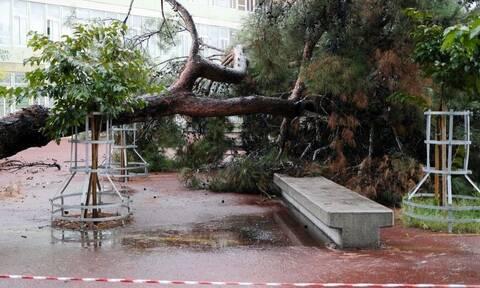 Κακοκαιρία «Μπάλλος»: Πτώση δέντρου σε σχολείο λίγο πριν από την προσέλευση των μαθητών