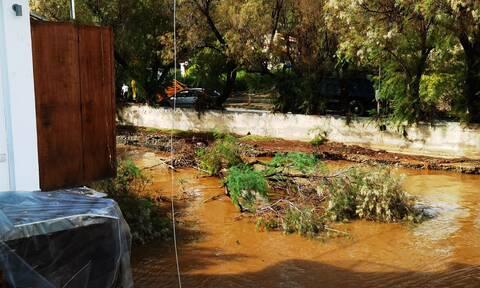 Κακοκαιρία: Μεγάλες καταστροφές σε επιχειρήσεις στην παραλία Λιμνιώνα στην Εύβοια - Κόπηκε ο δρόμος