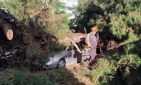 Θεσσαλονίκη: Δέντρο έπεσε πάνω σε πολυκατοικία στο κέντρο της Καλαμαριάς
