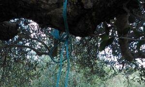 Τραγωδία στα Γιαννιτσά: Κυνηγοί βρήκαν γυναίκα κρεμασμένη σε δέντρο