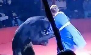 Αρκούδα επιτέθηκε σε έγκυο θηριοδαμαστή σε τσίρκο στη Ρωσία μπροστά σε παιδιά (vid)
