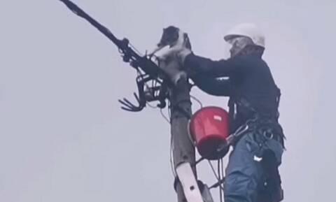 Καβάλα: Επιχείρηση διάσωσης γάτας που ήταν εγκλωβισμένη 30 ώρες σε κολώνα της ΔΕΗ (video)