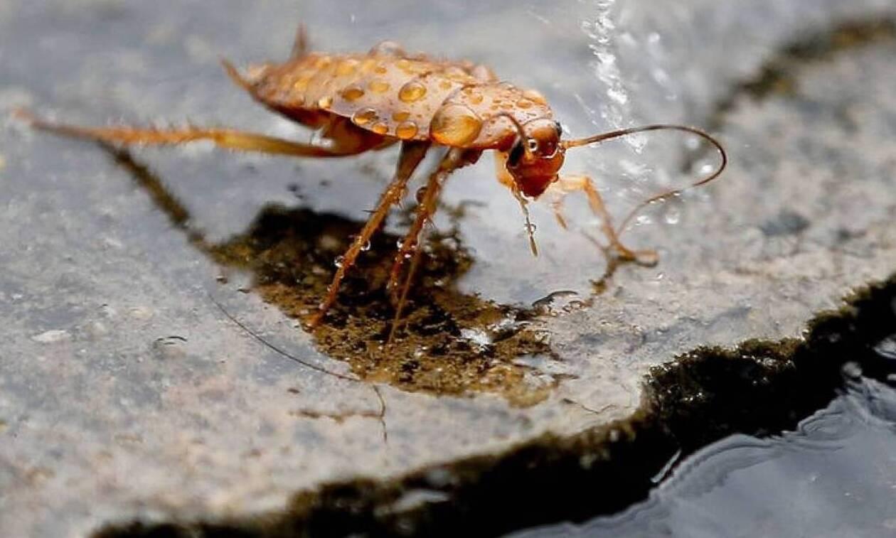 Ηράκλειο: Δεκάδες κατσαρίδες ξεχύθηκαν από φρεάτια της ΔΕΥΑΗ